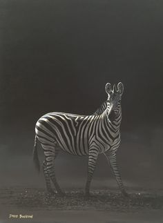 Wildlife Art Acrylic Painting - Zebra in the Moonlight by David Bucklow - Original Paintings