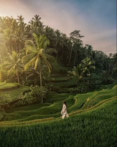 """Never stop exploring..."" 🌴🌿 - Tegalalang Rice Terraces - . . 📸 By dearest @adisumerta ➖➖➖➖➖➖➖➖➖➖➖➖ Explore Ubud whilst staying @attamesariubud ➖➖➖➖➖➖➖➖➖➖➖➖ Book your stay direct to info@attamesarivillas.com for a special rate www.attamesarivillas.com . . . . . . . . . . . #Bali #ubud #travel #travelgirl #wanderlust #paradise #beautifuldestination #honeymoon #bestofbali #baligasm #ricefields #nature #eatpraylove Girl Photography, Travel Photography, Best Of Bali, Bali Baby, Rice Terraces, Never Stop Exploring, Ubud, Where To Go, Fields"