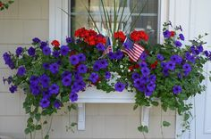 Red geraniums, white bacopa and blue petunias make a patriotic window box taking it through Memorial Day, Flag Day, 4th of July and Labor Day.