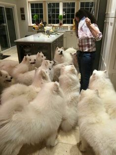 "just-call-me-your-darling: "" corgisandboobs: "" stillabunchofmisfits: "" I have a feeling her dog had puppies and she got too attached. I have a feeling she is me in the future. "" This is nearly enough dogs. "" Goals """