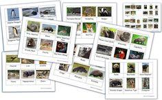 Animals Around the World (Free Montessori 3 Part Cards) - Homeschool Den