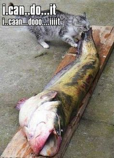 Humor. Funny Pictures. Cats