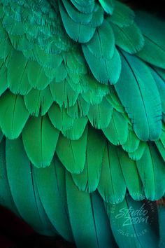 Green Macaw Parrot Feathers Photography Print, Exotic Wildlife and Bird Art for…