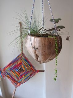 ?large coconut shell? as a planter