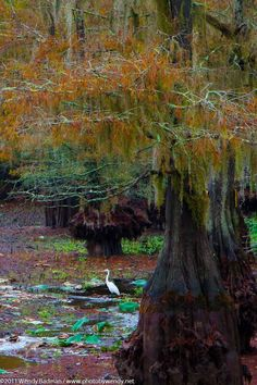 Cajun Country  . Chicot State Park . Louisiana