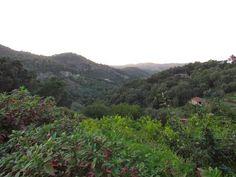 Ai mê rico Algarve!: Serra de Monchique