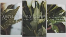 Plants and quotes Stress, You Never Know, Quotes, Plants, Pictures, Forgiveness, Quotations, Photos, Plant