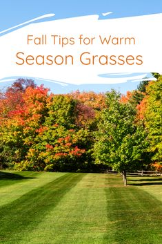 Fall Tips for Southern Grasses
