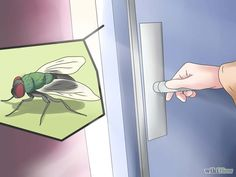 How to Get Rid of Flies in the House. Flies are an almost unavoidable nuisance in most homes, especially during the warmer parts of the year. However, there are steps you can take to minimize the presence of flies in your house. Bug Control, Pest Control, Bug Trap, Get Rid Of Flies, House Insects, Insecticide, Carpenter Bee, Stink Bugs, Insect Pest