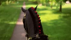 The world looks better when seen between the ears of a horse. - Horse's gif folder by RinaKisaragi on deviantART