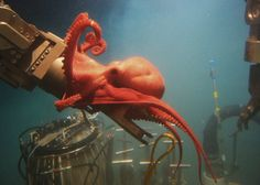 Фотографии природного мира от агенства океанических и атмосферных исследований