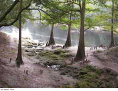Suwannee River State Park in Florida is one of the first parks added to the Florida Park system.