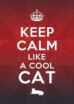 keep calm cats - Google Search
