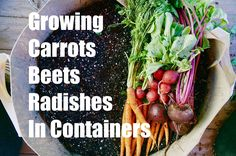 Growing Your Fall Garden # 3 - Growing Root Vegetables in Containers - C...