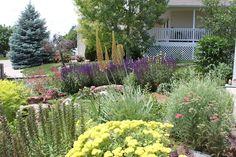 65 Best Landscape Ideas Ca Native Images Beautiful Gardens