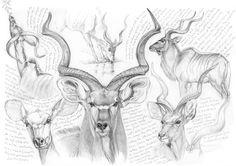 >oo MARCELLO PETTINEO oo< Animal Paintings, Animal Drawings, Art Drawings, Deer Drawing, Engraving Art, Prehistoric Creatures, Urban Sketching, Fauna, Drawing Techniques
