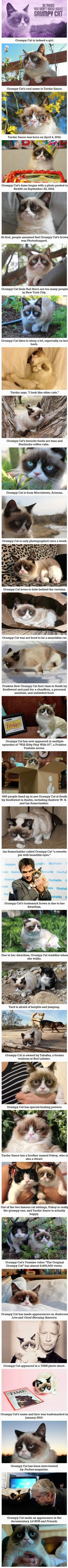 30 Things You Didnt Know About Grumpy Cat. She is neither fantasy, nor sci fi, book, nor tv, nor movie, but I LOVE her.