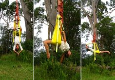 Stretching with the birds n bees. Yoga swing suspended from a huge eucalyptus tree.