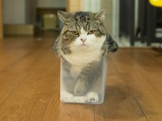 """ah, Maru!  Don't you think you've out grown that box?"" [2-1]"