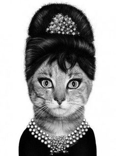 Audrey Hepburn Kitty - Breakfast at Tiffanys - Made me SMILE (: