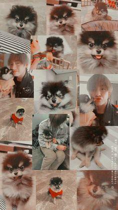 Taehyung e Yeontan Bts Taehyung, Vlive Bts, Bts Bangtan Boy, Foto Bts, Bts Photo, Bts Dogs, V Bts Cute, V Bts Wallpaper, Bts Aesthetic Pictures