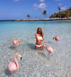 This could actually be you if you traveled here...swim with flamingos at a resort in Aruba.