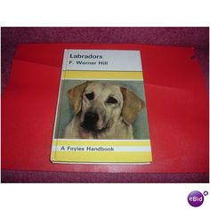 LABRADORS Listing in the Other,Dogs,Pets,Home & Garden Category on eBid United Kingdom | 147652450