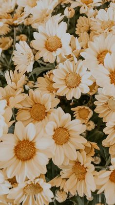 Flor Iphone Wallpaper, Frühling Wallpaper, Spring Wallpaper, Phone Wallpaper Images, Aesthetic Desktop Wallpaper, Iphone Background Wallpaper, Sunflower Wallpaper, Flower Aesthetic, Jolie Photo