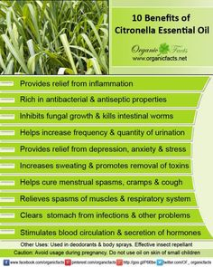 Health Benefits of Citronella Essential Oil