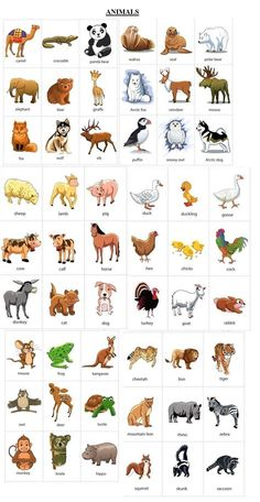 Learning English For Kids, English Worksheets For Kids, English Lessons For Kids, Kids English, English Activities, Idioms Activities, English English, Vocabulary Worksheets, English Vocabulary List