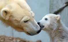 Polar bears :)  Germany