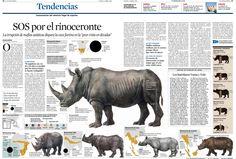 infografías los rinocerantes - Google Search