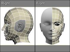 3D model of a human head