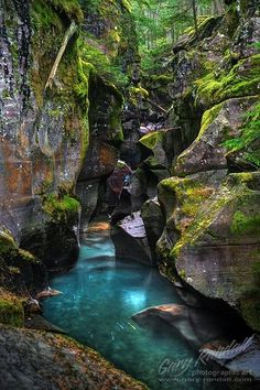 Avalanche Creek Gorge at Glacier National Park, Montana  #travel