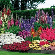 Flower Garden Design, Flower Garden Layouts, Flower Bed Designs, Garden Shrubs, Garden Beds, Garden Cottage, Easy Garden, Herb Garden, Garden Fencing