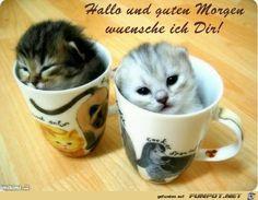 Hallo und guten Morgen