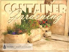 Contain your garden - grow plants in all kinds of plant pots and planters... Container Gardening