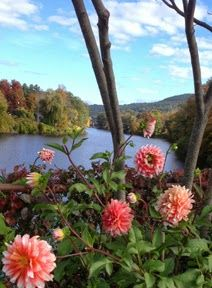 Dahlias on the Bridge of Flowers in Shelburne Falls, MA. The Quilts of Ann Brauer: toward a better image of the dahlias