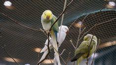 Parrot, Animals, Small Animals, Freiburg, Parrot Bird, Animaux, Parrots, Animal, Animales
