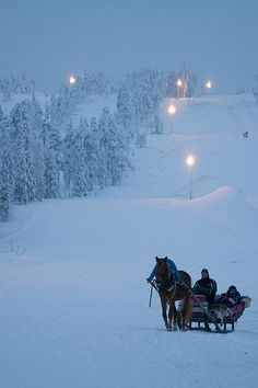 Horse Sled, Lapland, Finland