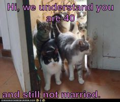 Hi, we understand you are 40 and still not married.    TOO FUNNY!!!