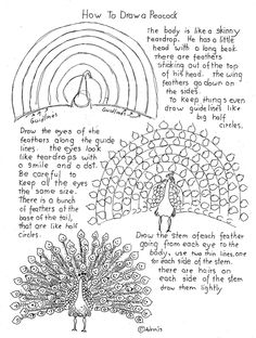 How To Draw A Peacock Worksheet. There are project notes at the blog. http://drawinglessonsfortheyoungartist.blogspot.com/2013/04/how-to-draw-peacock-worksheet.html