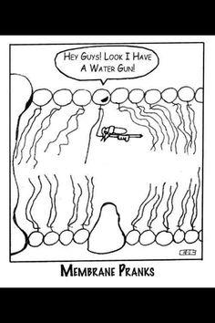 ah the good ol' phospholipid bilayer joke!