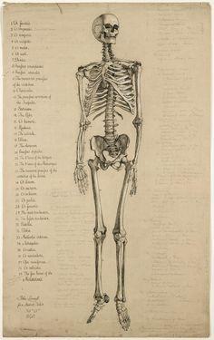 anatomical drawing of a skeleton, 1840