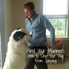 Love and Paws: Mind Your Manners: How to Stop Your Dog From Jumping