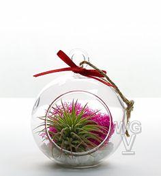 """Opus 3 Color Pop 3"""" Terrarium / Ornament Kit Moss Set"""