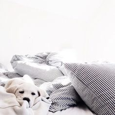 Puppy Love :: The most funny + cutest :: Free your Wild :: See more adorable Puppies + Dogs :: Animals And Pets, Baby Animals, Cute Animals, I Love Dogs, Puppy Love, Cute Puppies, Dogs And Puppies, Doggies, Cat Dog
