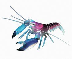 little crayfish