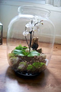 Bonsai Terrarium For Landscaping Miniature Inside The Jars 82 - DecOMG Orchid Terrarium, Mini Terrarium, Succulent Terrarium, Indoor Water Garden, Indoor Plants, Orchid Care, Plant Care, Ikebana, Garden Projects