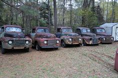A row of four 1948-1950 Fords, with one 1947 or earlier truck mixed in.